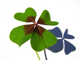 30 φυτα fot 330x250 100.000 θέσεις εργασίας, στην Γερμανία, στον τομέα των φωτοβολταϊκών τείθονται σε σοβαρό κίνδυνο