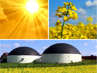 13 energiaka fyta fot 330x248 Επενδύσεις 9 δισ. ευρώ έως το 2020 στην παραγωγή βιοκαυσίμων