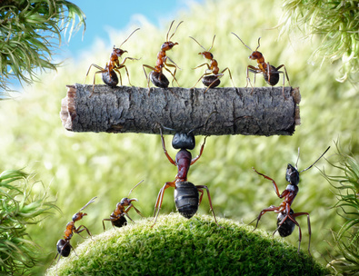 Mirmigas Διαβούλευση σχεδίου νόμου για μέτρα προστασίας, ανάπτυξης και διαχείρισης δασικών οικοσυστημάτων